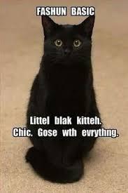 File:Black Kitteh.jpg