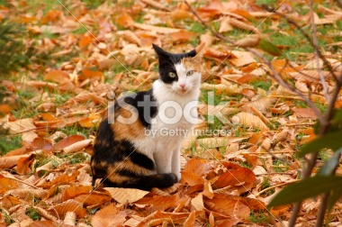 File:Jazlyn the Kitty2.jpg