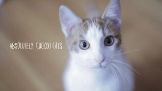 Absolutely Cuckoo Cats