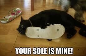 File:Aa Black Cat.jpg