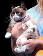 Grumpy Cat by Gage Skidmore