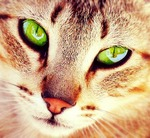 File:Cat with Grreen eyes.jpg