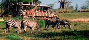 Kilamnjaro Safari
