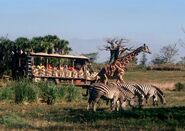Animal-kingdom-safari