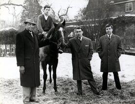 Ron horse