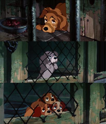 File:Tumblr Dog Pound Dogs Sad.png