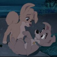Angel Gallery The Lady And The Tramp Wiki Fandom