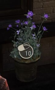 Supplement-flowerpot