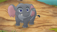 Follow-that-hippo (108)