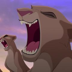 Львицы прайда рычат