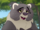 Mama Binturong (The Lion King: Revisited)