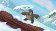 The-lost-gorillas (425)