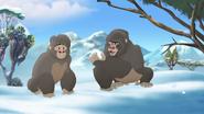 The-lost-gorillas (299)