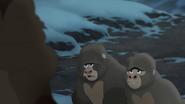 The-lost-gorillas (465)