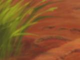 Zazu (Lioner's Fanfics)