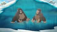 The-lost-gorillas (449)