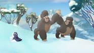 The-lost-gorillas (401)