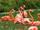 Flamingo/Gallery