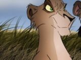 Kuzi (Scar's Pride)