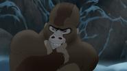 The-lost-gorillas (487)