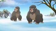 The-lost-gorillas (301)