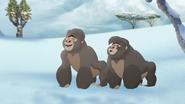 The-lost-gorillas (326)