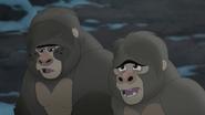 The-lost-gorillas (470)