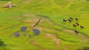The-imaginary-okapi (103)