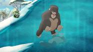 The-lost-gorillas (447)