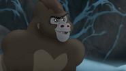 The-lost-gorillas (482)