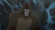 The-lost-gorillas (466)