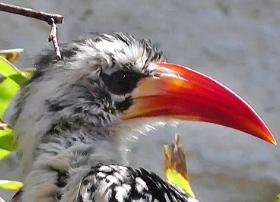Birdanimal