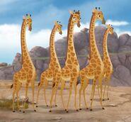 Twiga's Herd