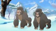The-lost-gorillas (331)