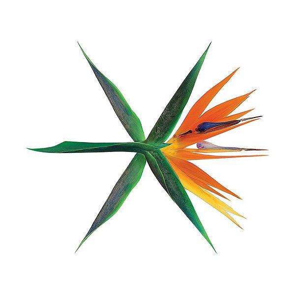 53 Gambar Album Exo Paling Keren