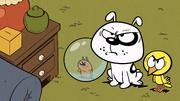 S03E23A Mad pets