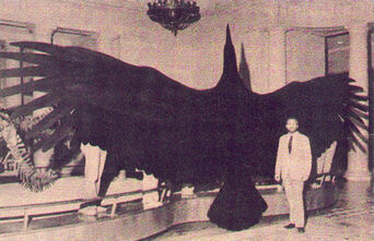 Moth243