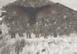 Moth618