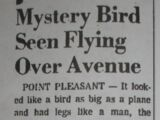 Mystery Bird Seen Flying Over Avenue