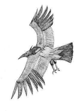 Moth246