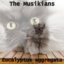 Eucalyptus aggregata
