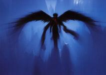 Angel1.2