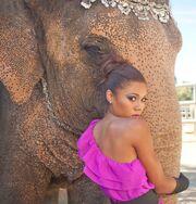 Toks Olagundoye Elephant