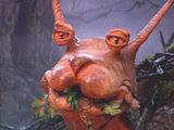 Gluckuk's Snail