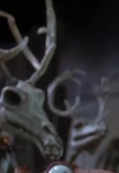 Reindeer11