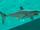 Shortfin.png