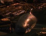WhaleOfATug23