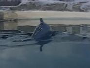 WhaleOfATug67
