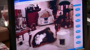 Cat nanny cam