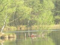 See im Naturschutzgebiet